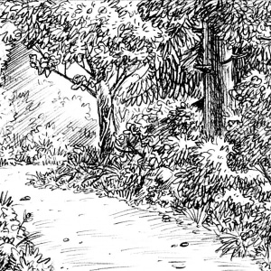 KH3152B06-forest-pathway